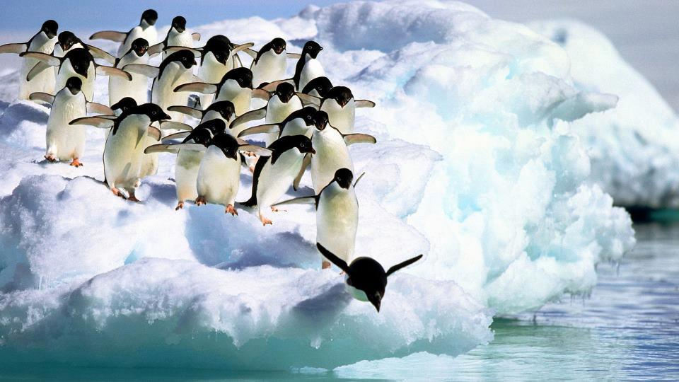 صورة اجمل صور حيوانات