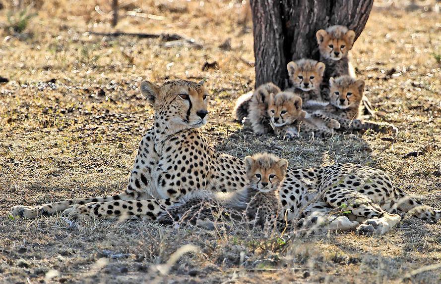 بالصور اجمل صور حيوانات