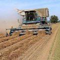 بالصور دور الزراعة في التنمية الاقتصادية