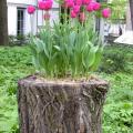 بالصور كيفية تزيين حديقة المنزل