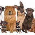 بالصور تحميل صور كلاب