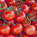 بالصور فوائد الطماطم للحامل