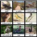بالصور انواع العصافير واسمائها