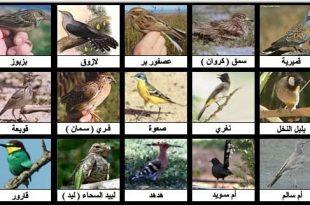 صورة انواع العصافير واسمائها