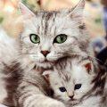 بالصور ما تفسير القطط في المنام