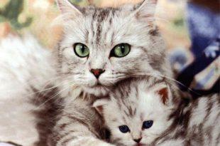 صور ما تفسير القطط في المنام