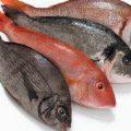 بالصور تفسير صيد السمك
