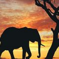 بالصور تفسير حلم الفيل