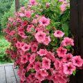 بالصور بحث عن النباتات الزينة