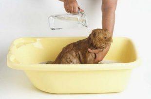 صور كيفية غسل القطط