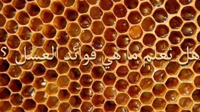 صورة فوائد عسل السدر للبشرة