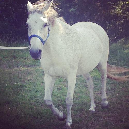 صورة الحصان الابيض في المنام