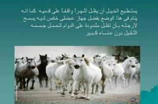 صورة معلومات نادرة عن الحيوانات
