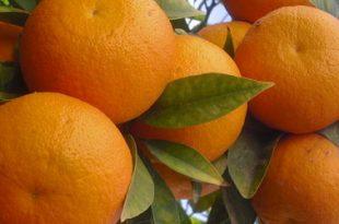 صورة قشر البرتقال للتنحيف