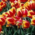 بالصور باقة زهور جميلة جدا