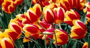 باقة زهور جميلة جدا