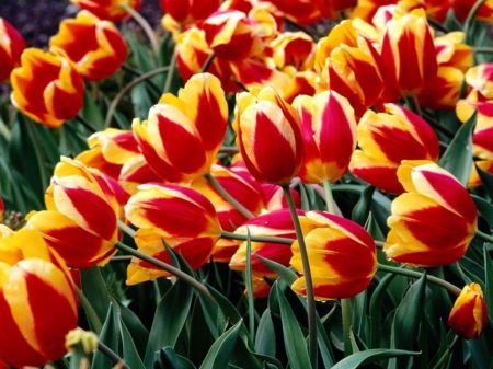 بالصور باقه زهور رائعة جدا