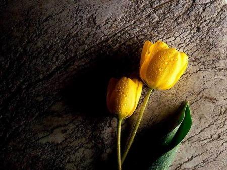 صور و رده و زهور