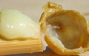 صورة غذاء ملكات النحل