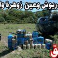 بالصور الحشيش المغربي