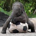 بالصور صور للحيوانات