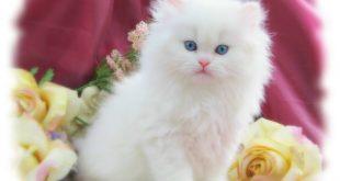 صور اجمل القطط