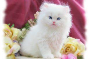 صورة صور اجمل القطط