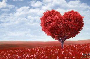 بالصور صور المحبة