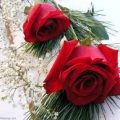 بالصور اجمل الصور للورود الحمراء
