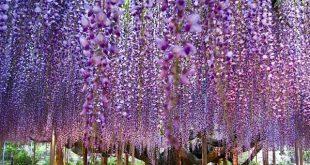 صور اجمل زهرة حب