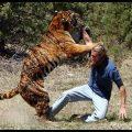 بالصور حيوانات متوحشه تهاجم البشر