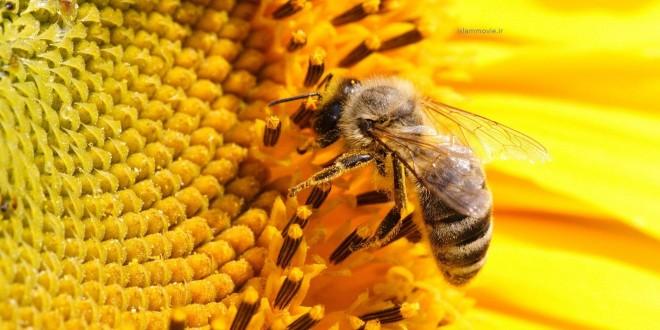 بالصور تفسير رؤية النحل في المنام 20160817 373