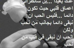 صورة اجمل كلمات في الحب