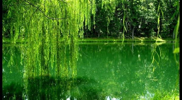 صور اللون الاخضر في الحلم