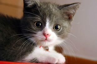 صور القطط في المنام