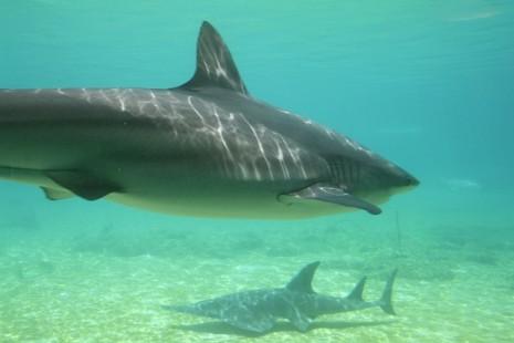 صورة رؤية الحوت في البحر في المنام