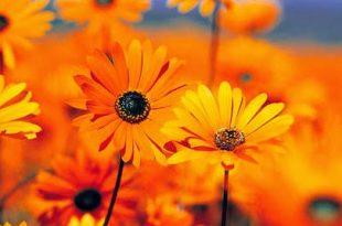 صورة ماذا يعني اللون البرتقالي
