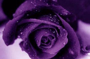 صورة معنى الوان الزهور