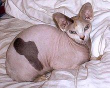 صور القطط الفرعونية