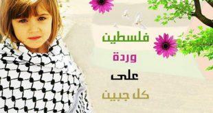 كلمات حزينة عن غزة