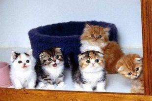 صور صور قطط رائعة
