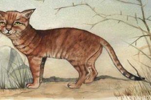 صور متوسط عمر القطط