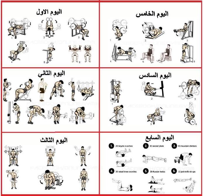 صور جدول تمارين كمال الاجسام للمبتدئين pdf
