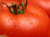 بالصور اضرار الطماطم 20160818 23 1 100x75