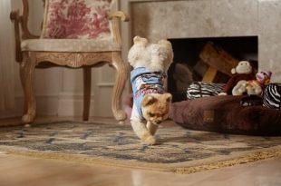 صورة اسرع كلب في العالم