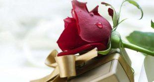 صور اروع الورود