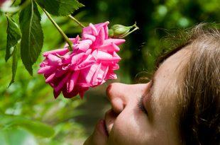 صورة رائحة الورد