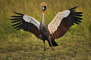 صورة صور اجمل طيور العالم