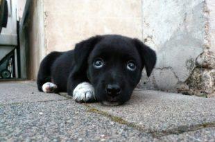 صور عضة الكلب في المنام ابن سيرين