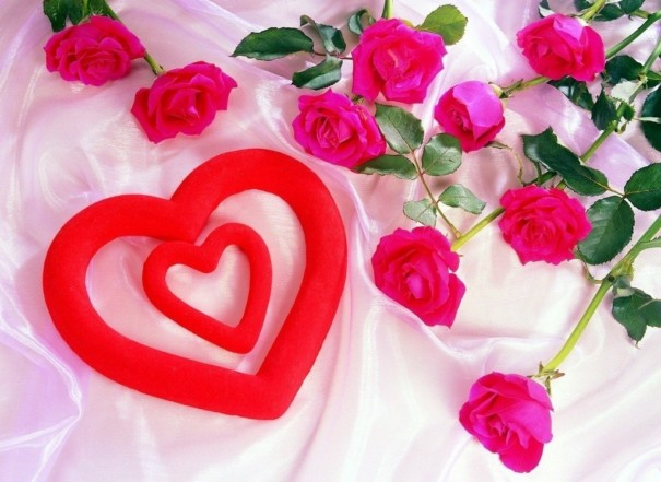 صورة صورة وردة حمراء